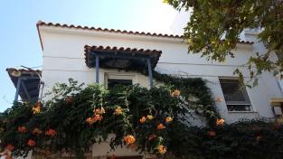 Blumen eines Balkons
